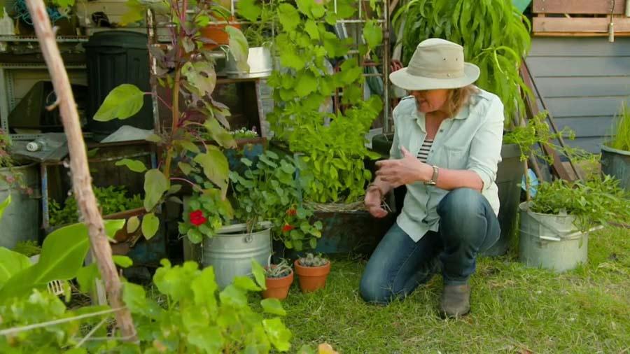 Gardening Australia episode 33 2019