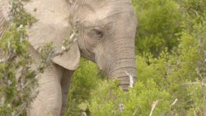 Great Parks of Africa episode 1 – Addo Elephant National Park