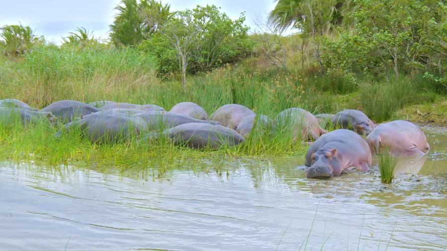 You are currently viewing Great Parks of Africa episode 3 – iSimangaliso Wetland Park