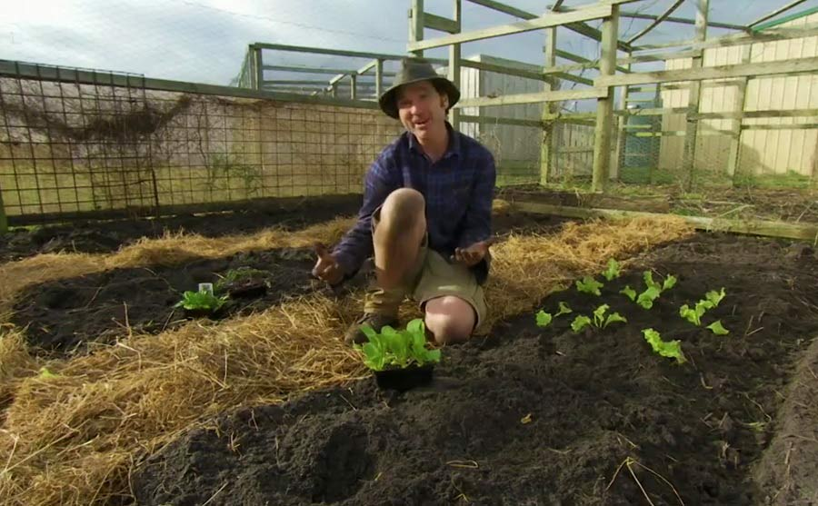 Read more about the article Gardening Australia episode 36 2019