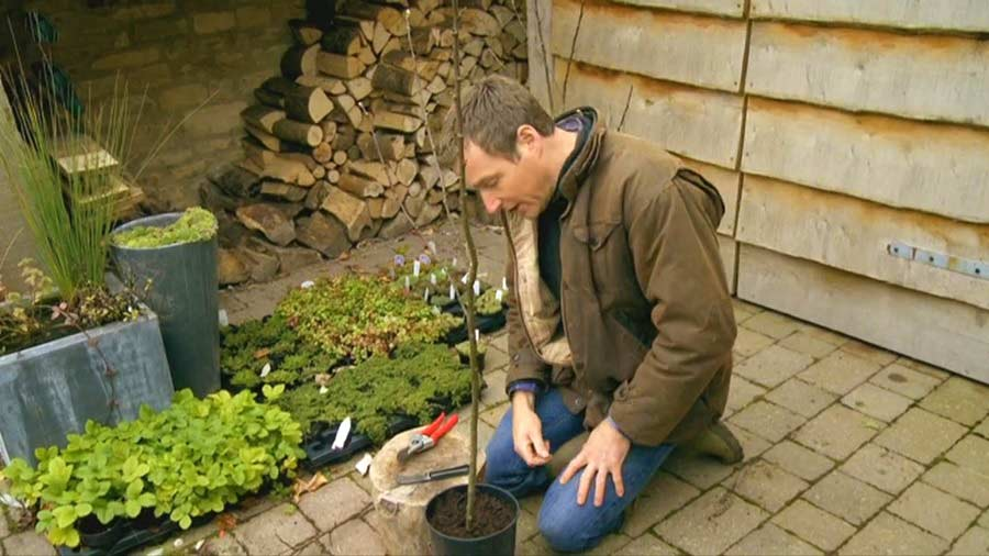 The A to Z of TV Gardening – Letter A