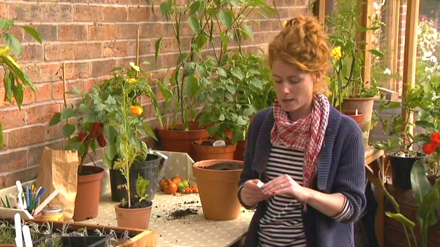 The A to Z of TV Gardening – Letter C