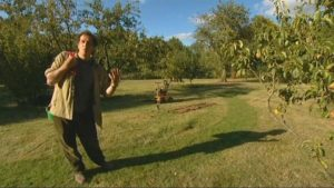 Read more about the article The A to Z of TV Gardening – Letter D