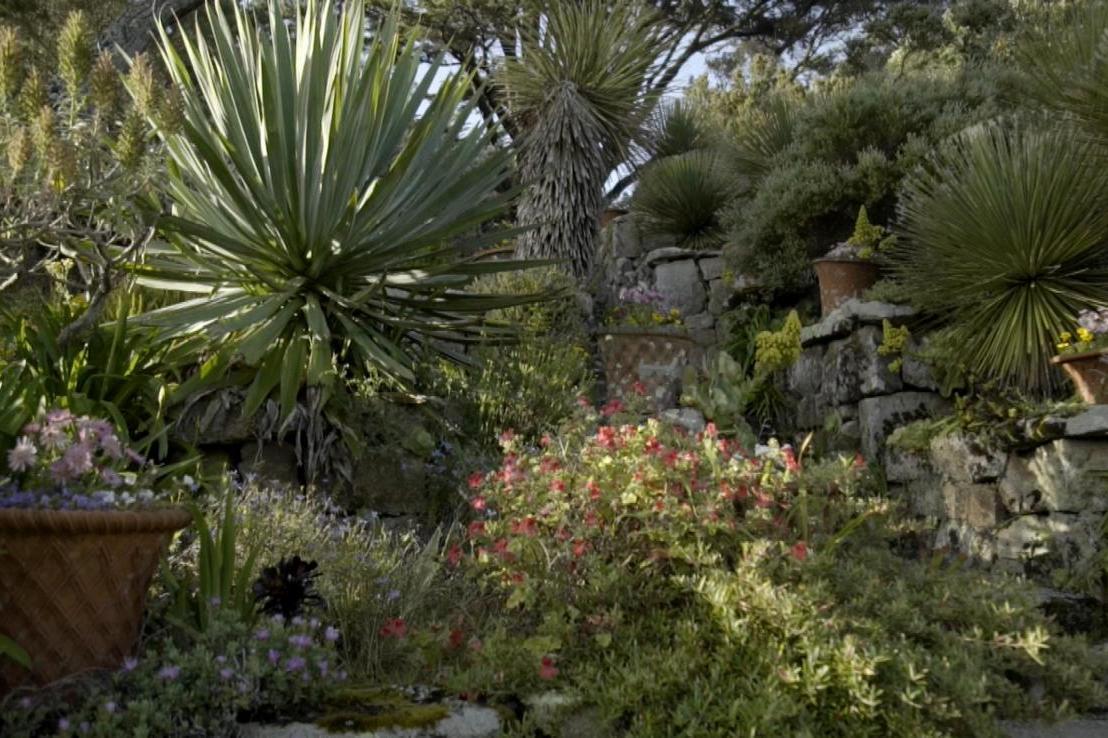 Gardens Near and Far episode 45 – Tresco Abbey Gardens
