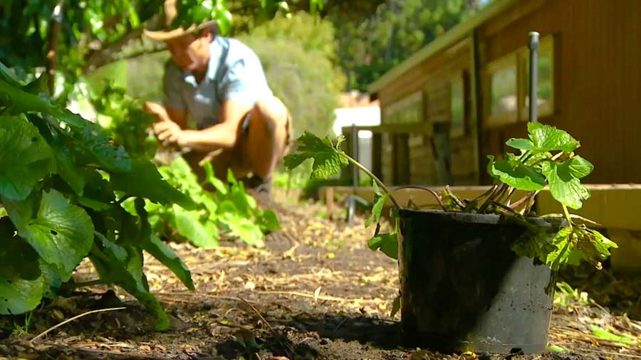 You are currently viewing Gardening Australia episode 40 2019