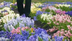 The A to Z of TV Gardening – Letter H