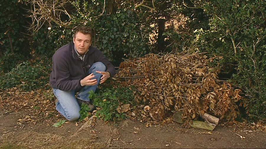 Read more about the article The A to Z of TV Gardening – Letter M