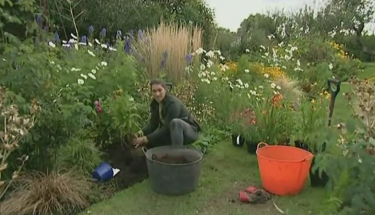 Read more about the article The A to Z of TV Gardening – Letter P