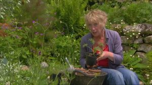 The A to Z of TV Gardening – Letter U