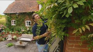 Read more about the article The A to Z of TV Gardening – Letter W