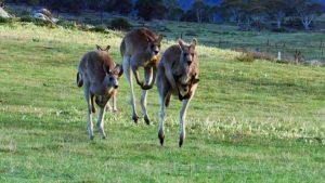 Australia Earth's Magical Kingdom episode 1 – Land