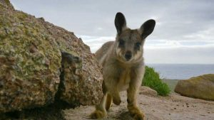 Read more about the article Australia Earth's Magical Kingdom episode 2 – Ocean
