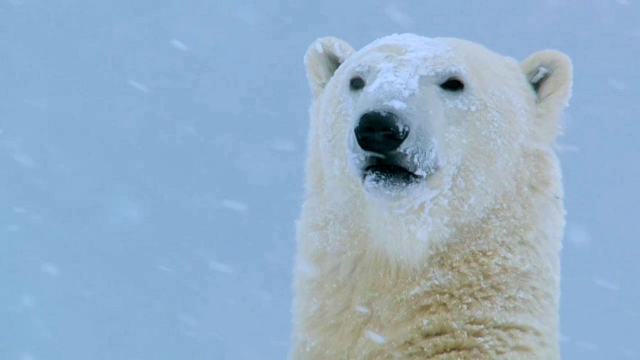 You are currently viewing Snow Animals
