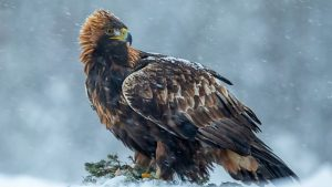 Read more about the article Winterwatch episode 2 2020