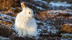 Read more about the article Winterwatch episode 3 2020