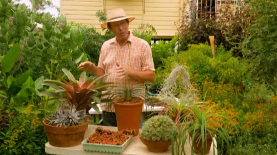 Read more about the article Gardening Australia episode 1 2020