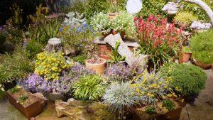 Gardening Australia episode 3 2020