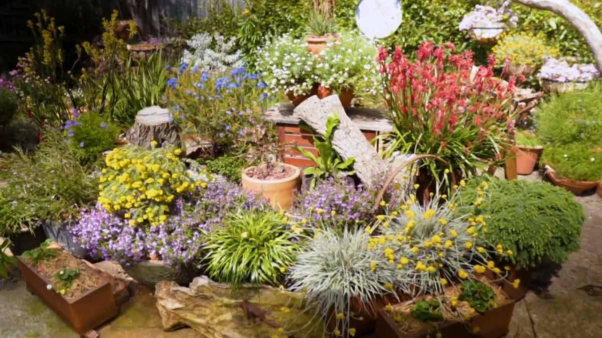 Gardening Australia Episode 3 2020 Gardening Advice To Inspire