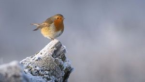 Read more about the article Winterwatch episode 4 2020