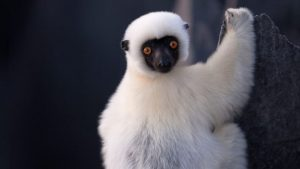 Read more about the article Earth's Tropical Islands episode 1 – Madagascar