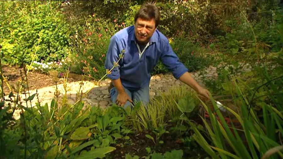 You are currently viewing Gardeners World episode 20 2002