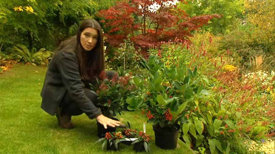 Gardeners World episode 23 2002