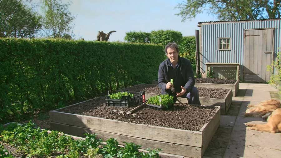 You are currently viewing Gardeners World episode 6 2020