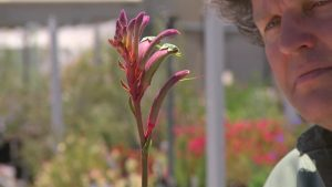 Read more about the article Gardening Australia episode 12 2020