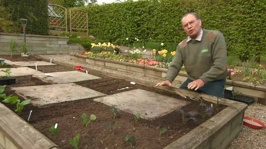 Read more about the article The Beechgrove Garden episode 1 2020