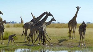 Waterworld Africa episode 6 – Chobe River of Life