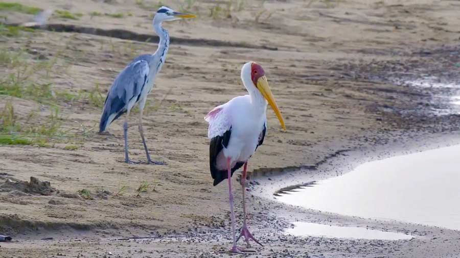 You are currently viewing Waterworld Africa episode 8 – Wetland Wonder