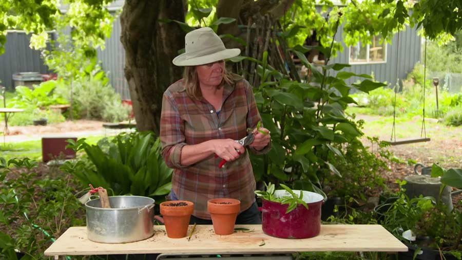 Read more about the article Gardening Australia episode 13 2020