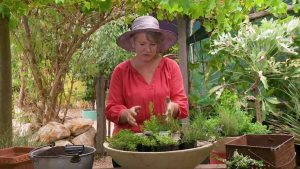 Read more about the article Gardening Australia episode 14 2020