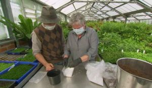 Read more about the article Gardening Australia episode 15 2020
