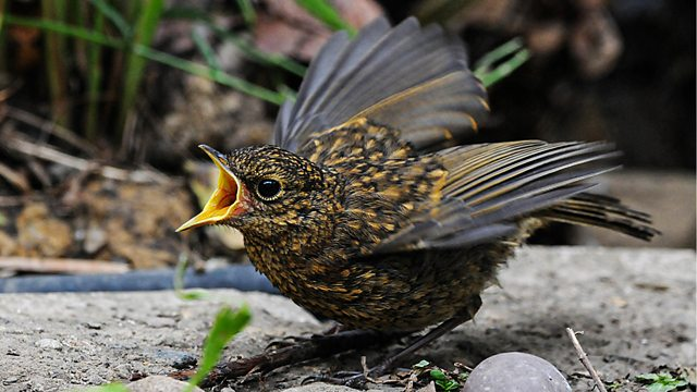 Read more about the article Springwatch episode 2 2020