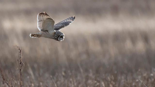 Read more about the article Springwatch episode 4 2020