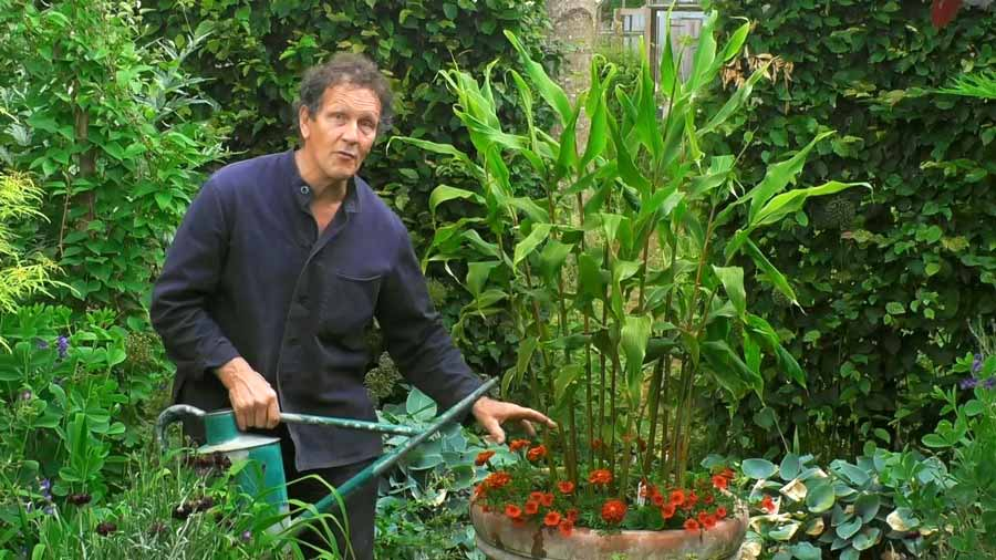 Read more about the article Gardeners World episode 15 2020