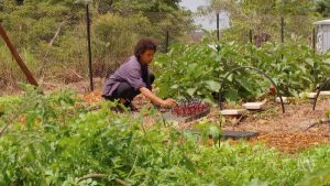 Read more about the article Gardening Australia episode 20 2020