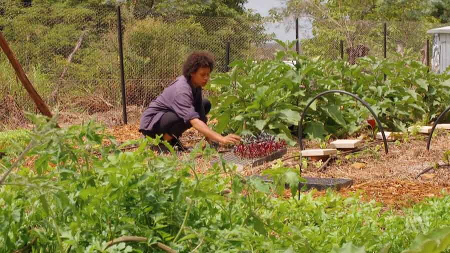 You are currently viewing Gardening Australia episode 20 2020