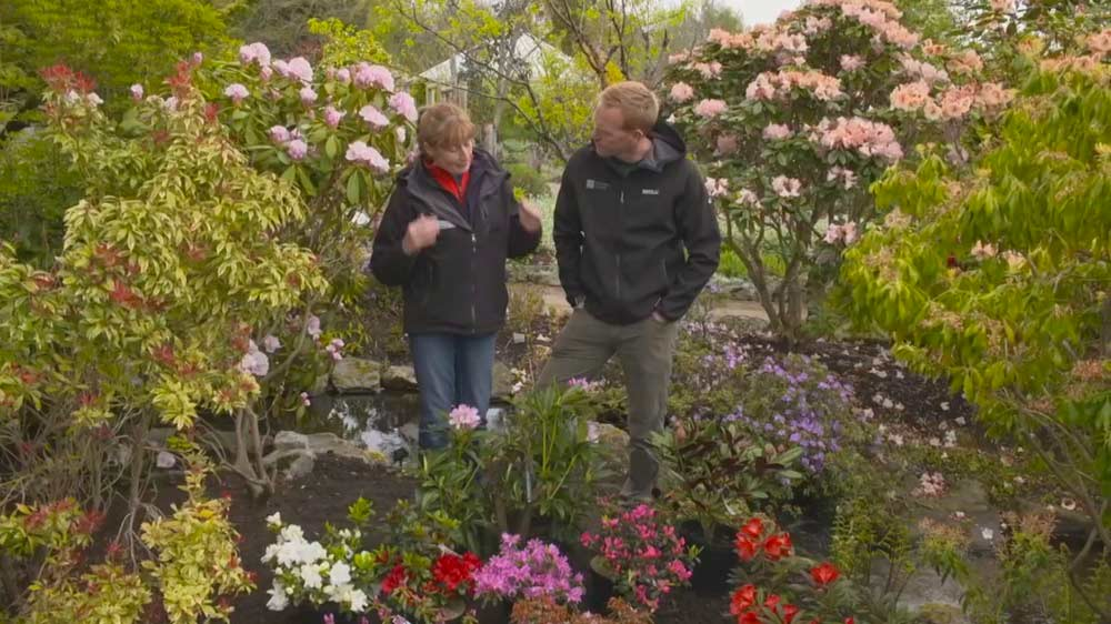 Read more about the article The Beechgrove Garden episode 11 2020