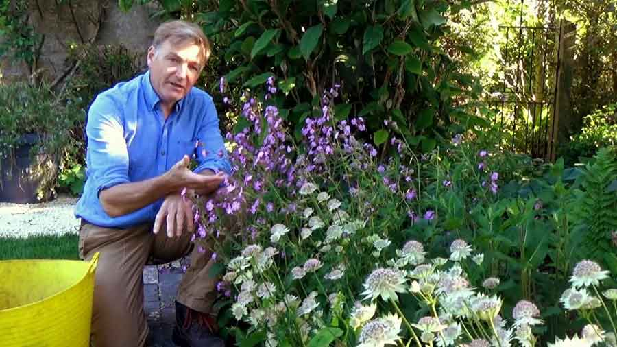 Read more about the article The Beechgrove Garden episode 9 2020