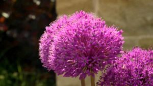 Read more about the article The Instant Gardener episode 2