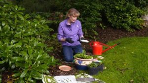 The Beechgrove Garden episode 17 2020