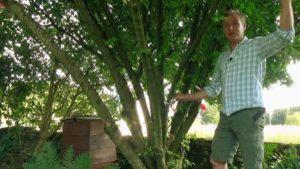 The Beechgrove Garden episode 19 2020