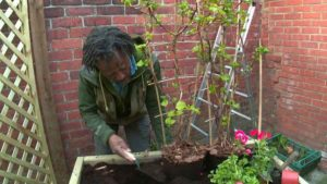 Read more about the article The Instant Gardener episode 14