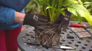 Gardening Australia episode 26 2020