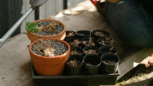 Read more about the article Gardening Australia episode 28 2020