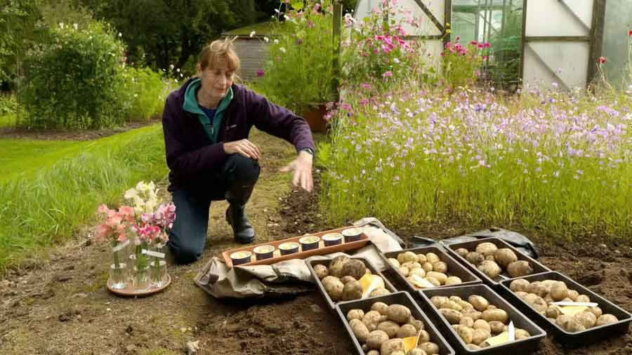 Read more about the article The Beechgrove Garden episode 22 2020