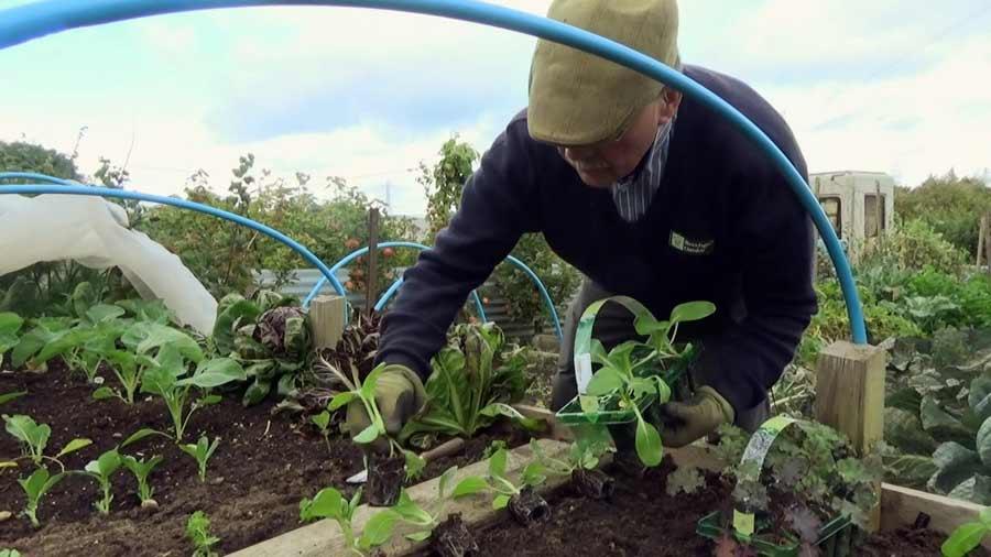 The Beechgrove Garden episode 23 2020