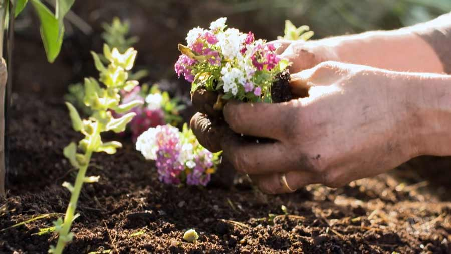 Read more about the article Gardening Australia episode 29 2020